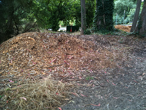 Woodchip pile at Golden Gate Park disc golf course